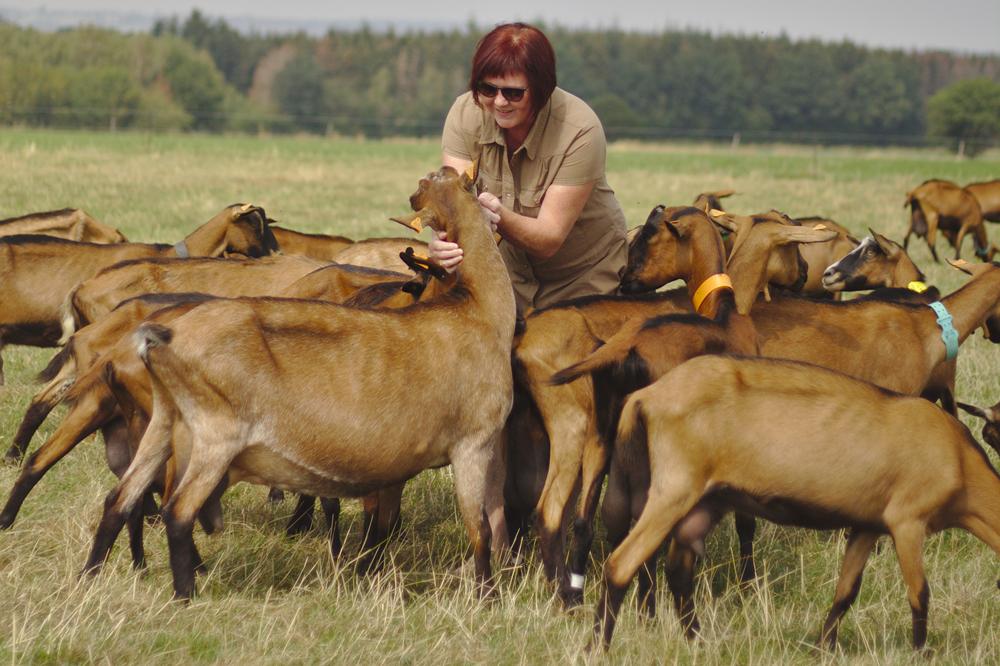 Kathy et ses chèvres
